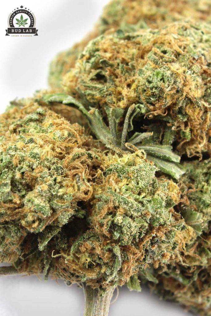 Bud Lab Blueberry Kush AAA Strain, close up view