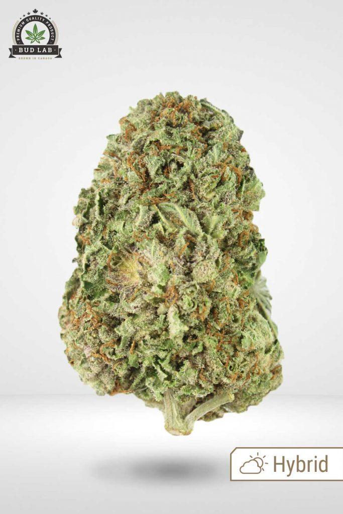 Pink Kush Weed Bud Lab display image