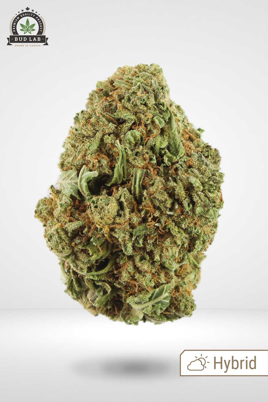 OG Kush Marijuana Bud Lab Front View