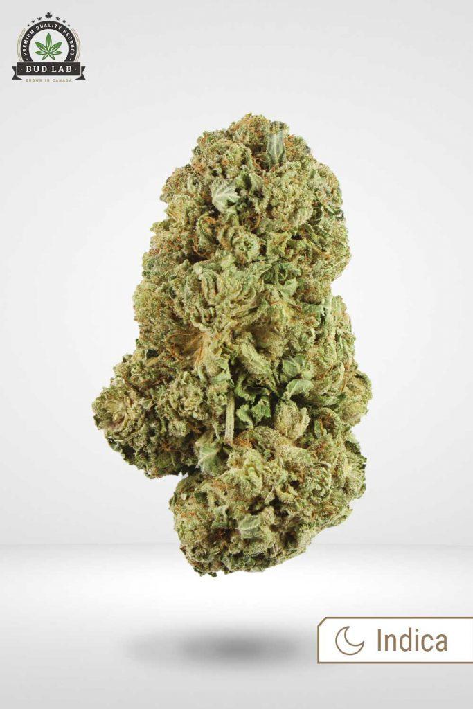 Violator Kush weed strain Bud Lab Front View