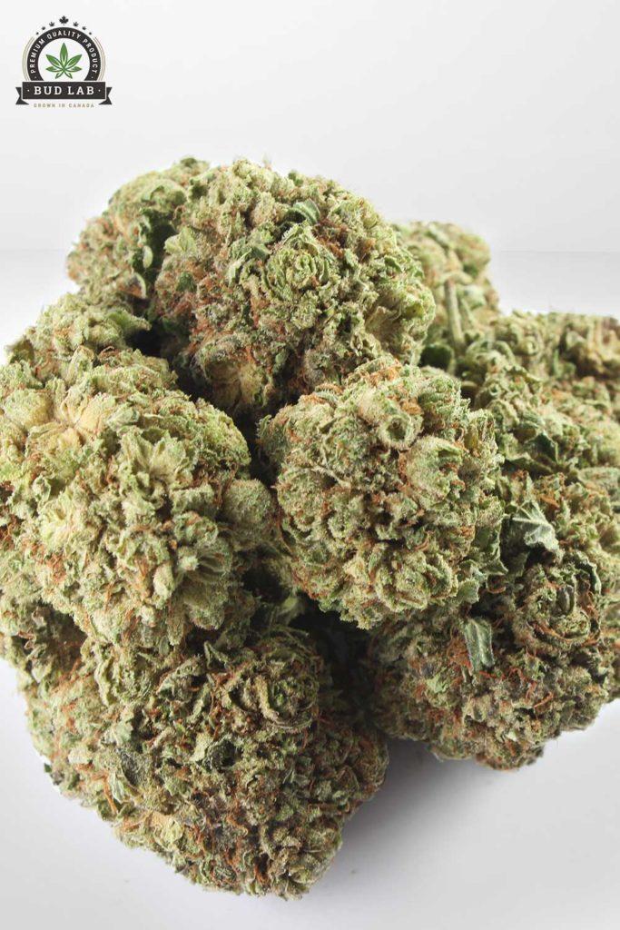 Violator Kush marijuana AAA, close up shot 2