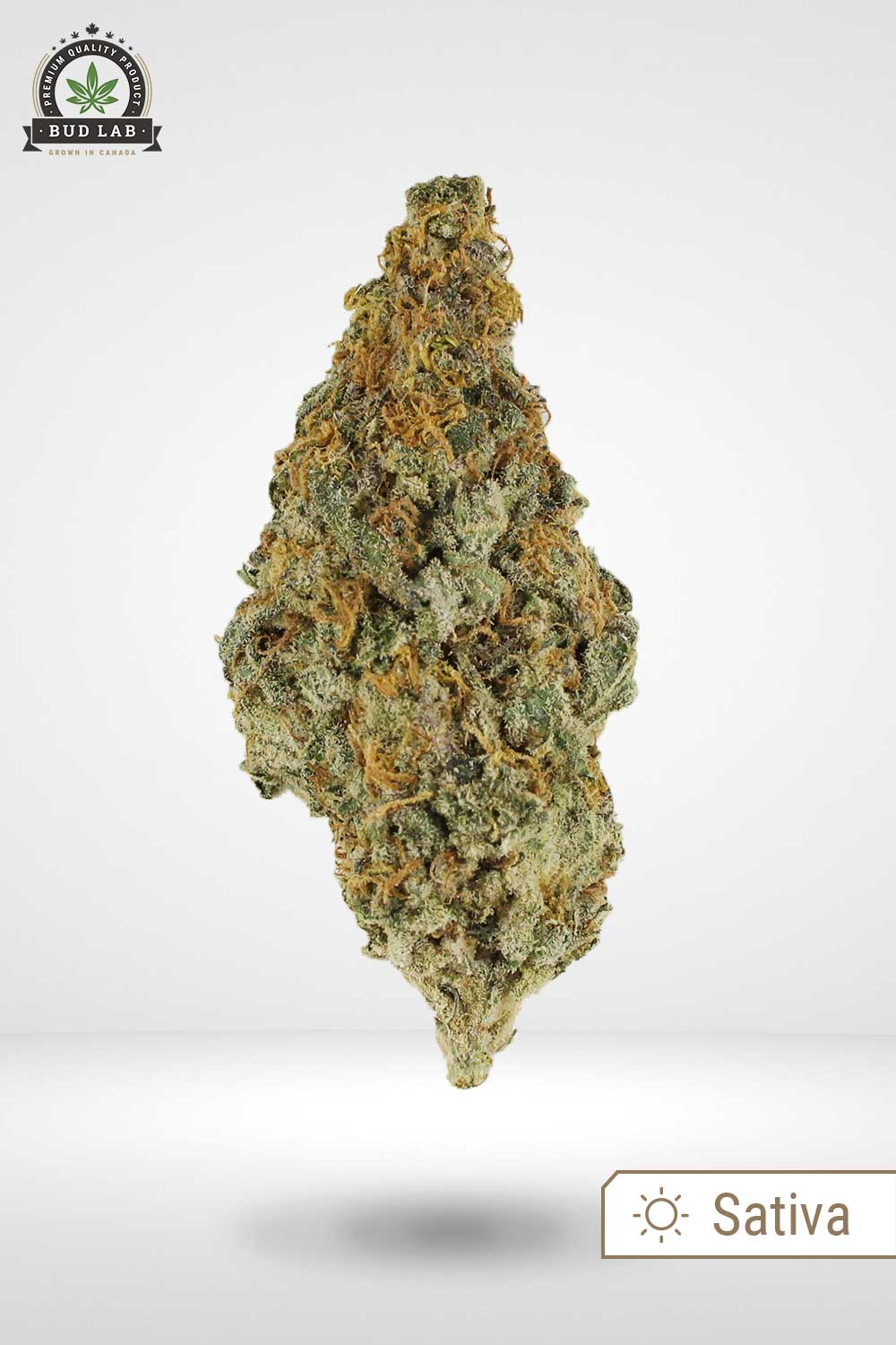 Lemon Haze Sativa Strain Bud Lab Front View