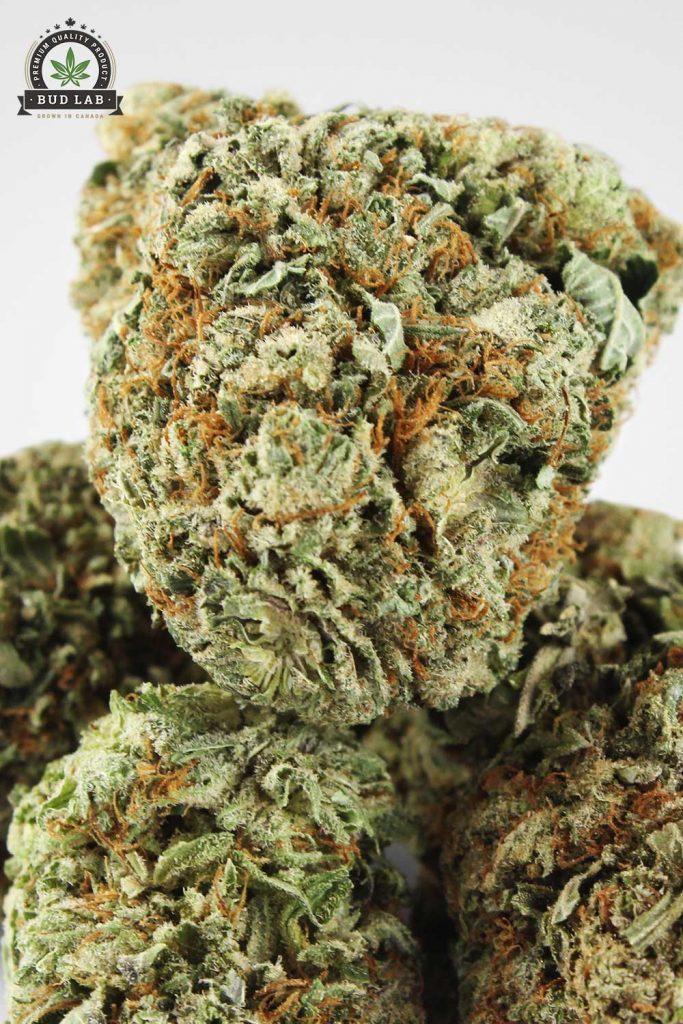 Black Kush AA Weed Strain Bud Lab View 1