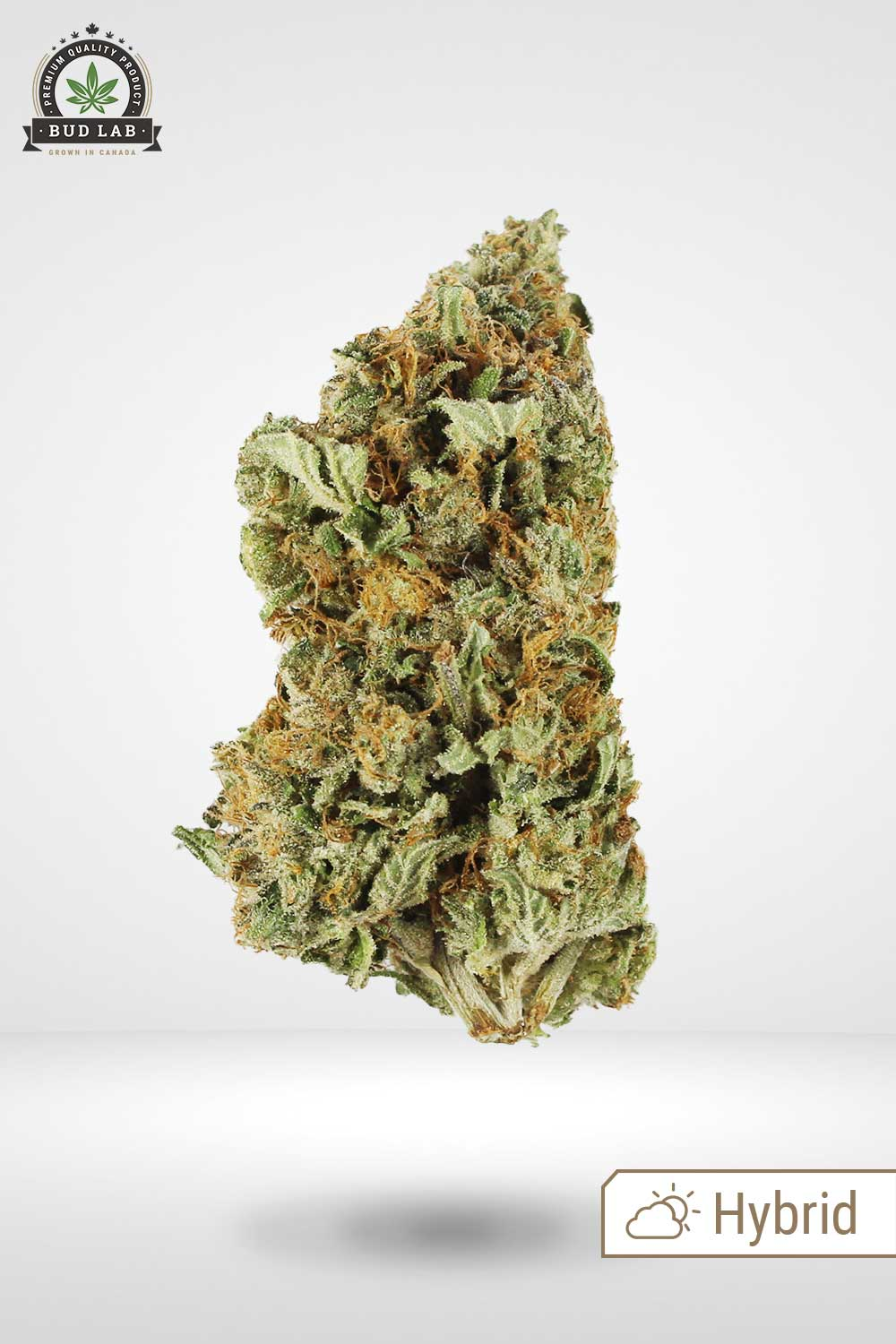 Krazy Glue AAA Weed Feature image