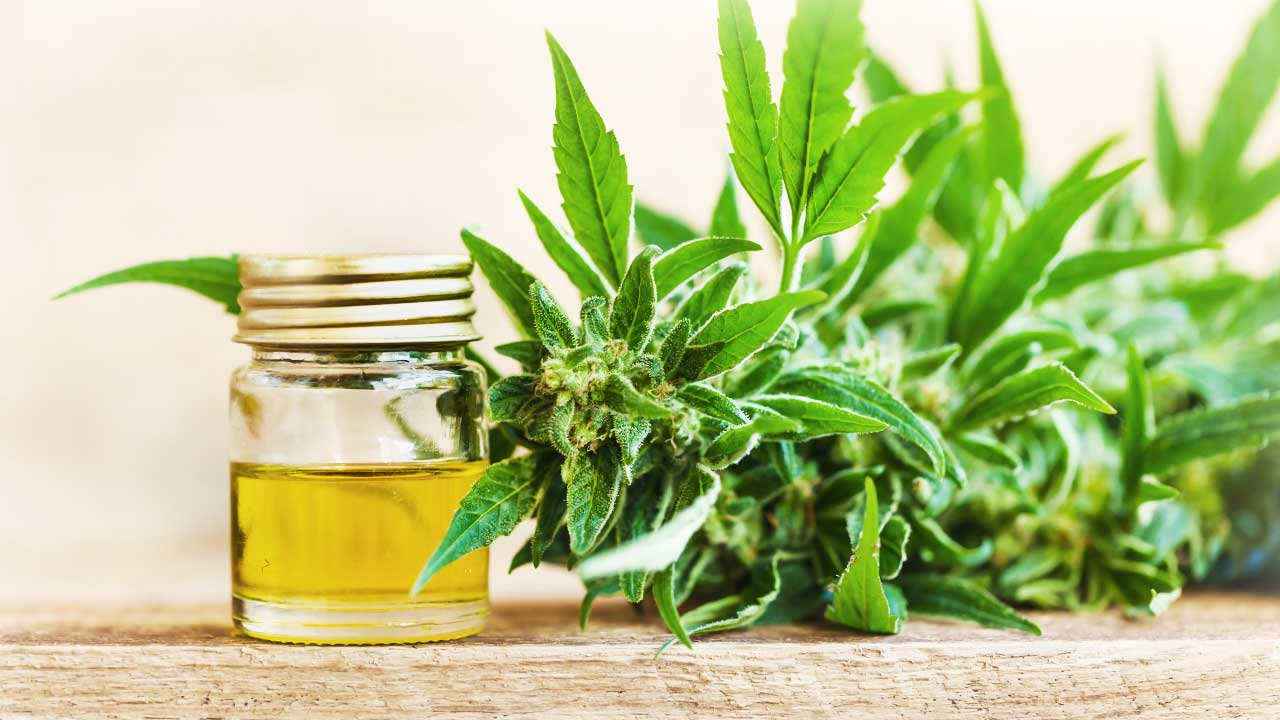 The Variety of Uses for Cannabis Oil