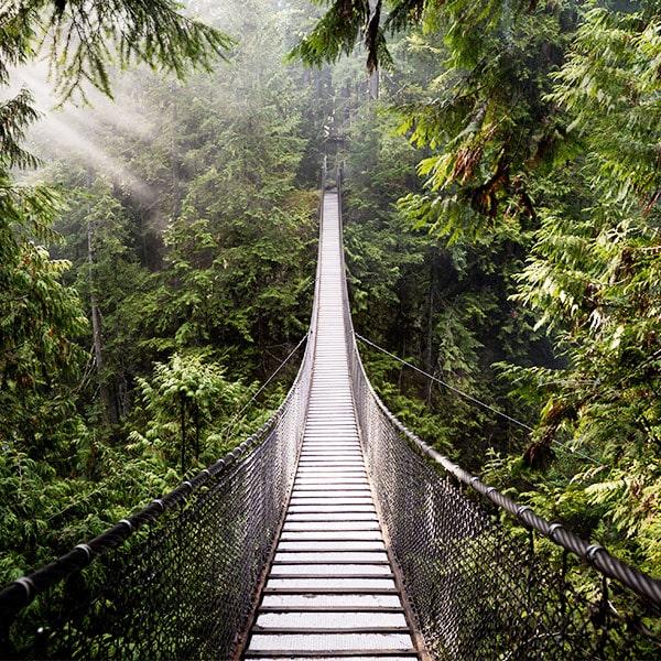 Bud Lab Bridge Across a Rain Forest