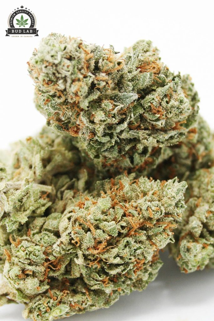 Bud Lab Amnesia Haze AAA Sativa Strain View 2