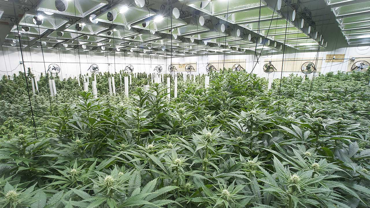 Bud Lab Cannabis Farm, Lab Tested Facility