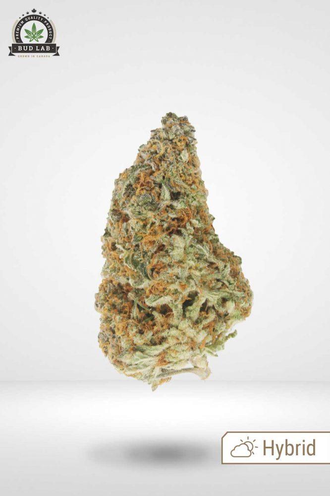 AAA Mendo Breath Bud Strain Hybrid Profile