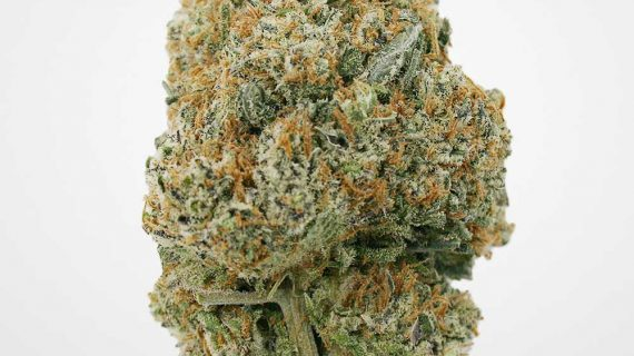 Bud Lab Platinum Kush AAA View 3