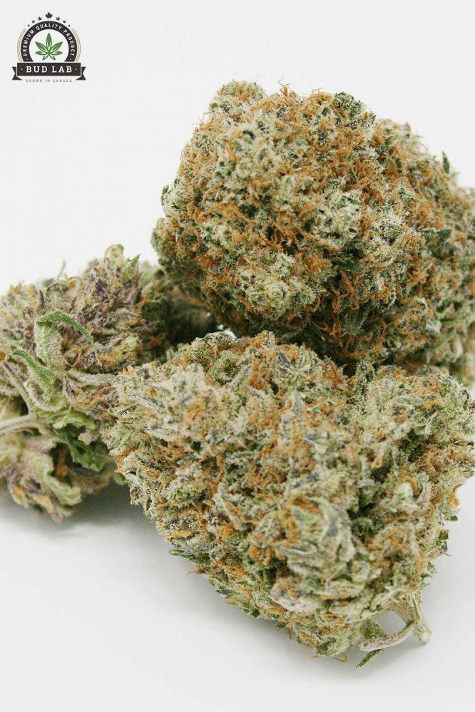 Bud Lab Platinum Kush AAA View 2
