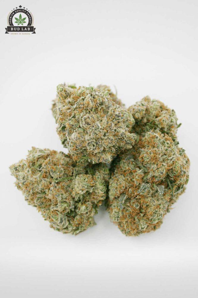 Bud Lab Platinum Kush AAA View 1