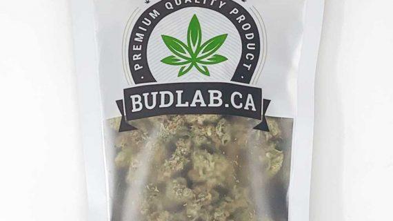 Bud Lab Mystery Hybrid AA Grab Bag