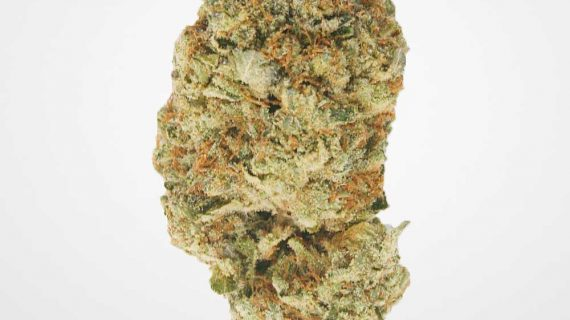 Bud Lab Pinkstar AAA Nug Cover Photo