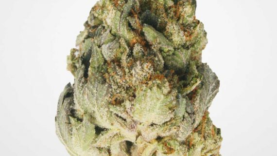 Bud Lab Girl Scout Cookies AAA Cover