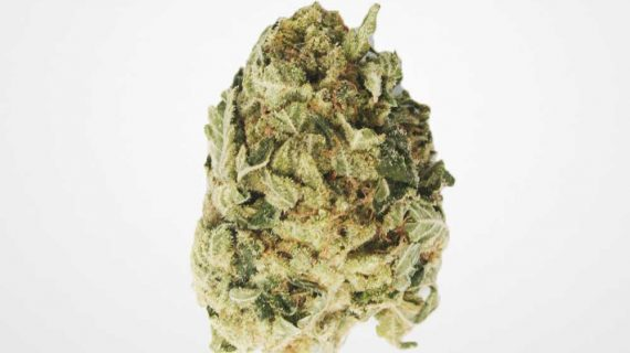 Bud Lab AA King Kush Nugs Cover