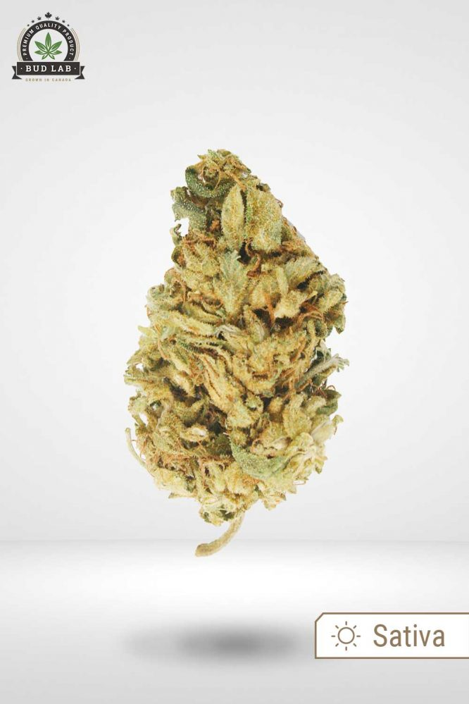 Bud Lab Sour Diesel AA Nug Cover