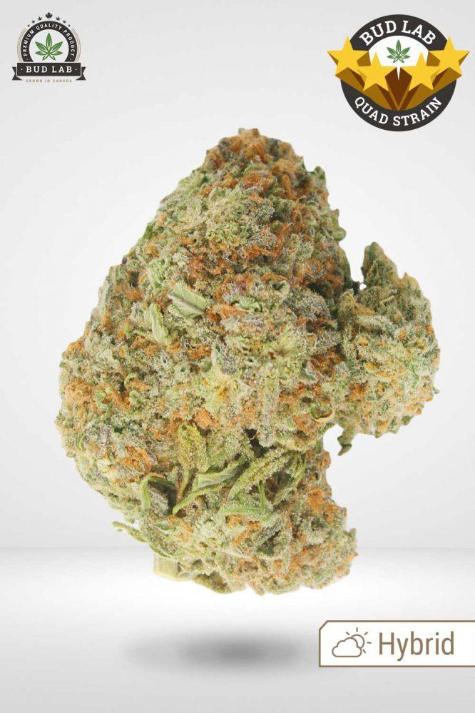 Alien OG, AAAA Cannabis Strain Front View