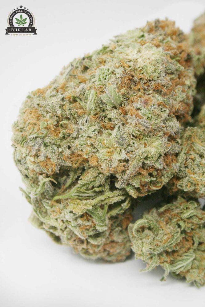 Alien OG, AAAA Cannabis Strain 2