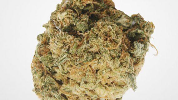 Gorilla Glue #1 Cannabis Strain Hybrid