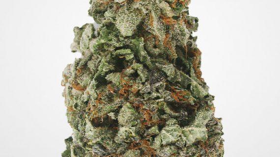 AAA Green Crack Bud Strain, Sativa