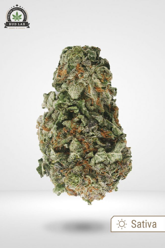 AAA Green Crack Bud Strain, Sativa