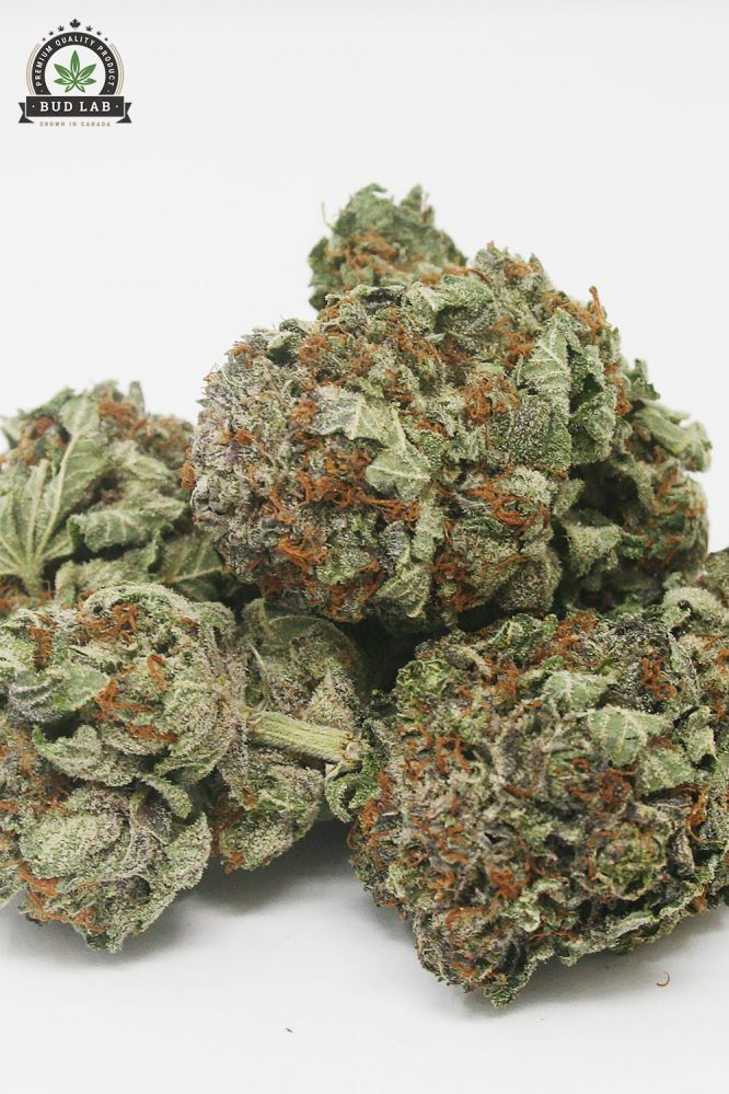 AAA Green Crack Bud Strain, Sativa 2