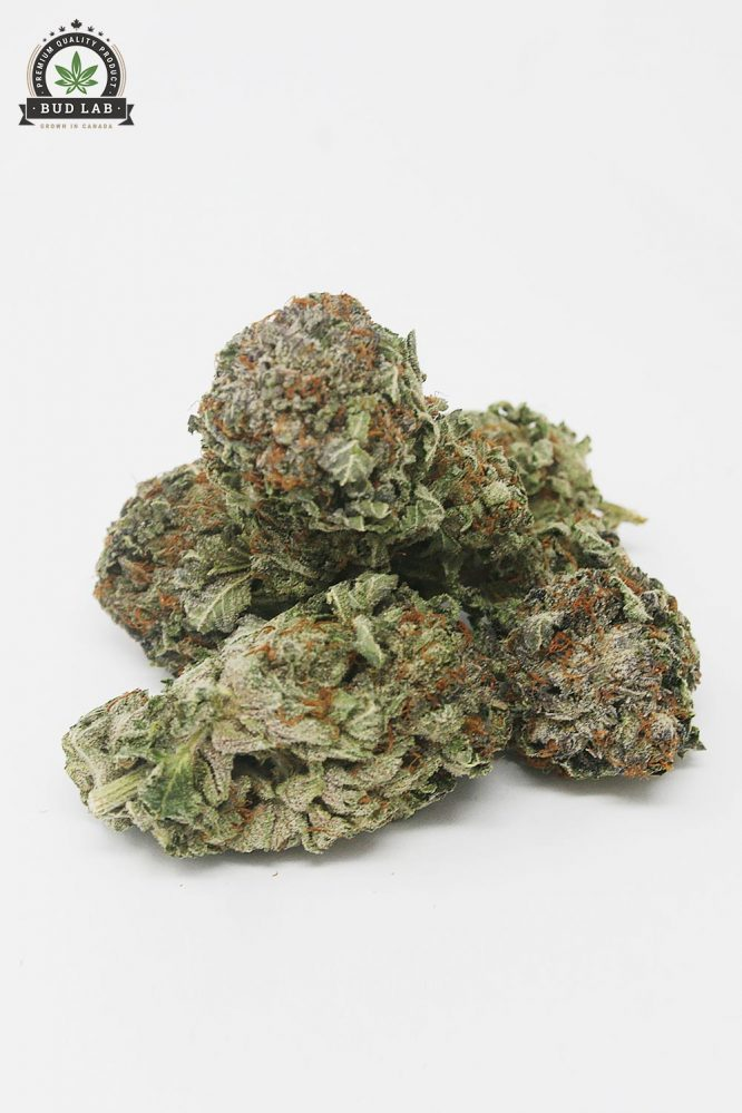 AAA Green Crack Bud Strain, Sativa 3