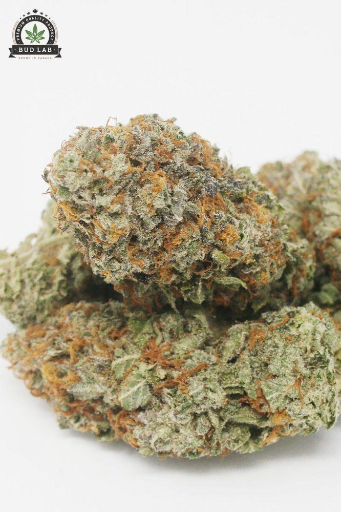 AAA King Tut Cannabis Strain, Sativa 2
