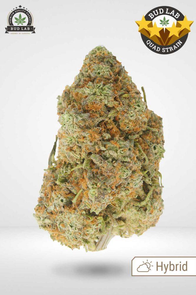 Sugar Cookie AAAA Cannabis Strain Hybrid Profile