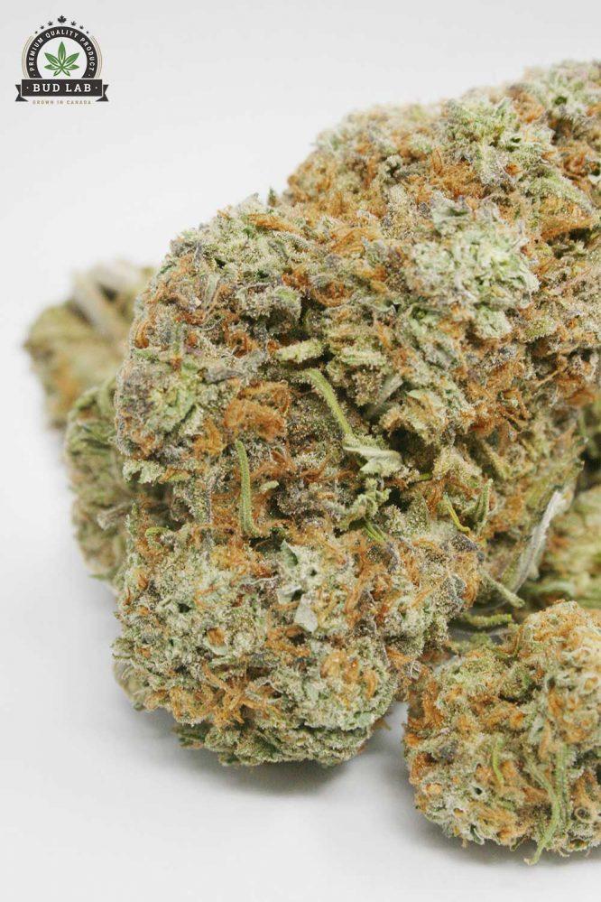 Sugar Cookie AAAA Cannabis Strain 2