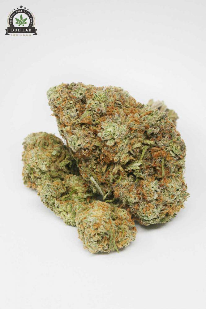 Sugar Cookie AAAA Cannabis Strain