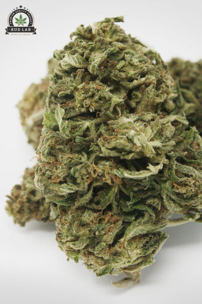 God's Green Crack AA Cannabis Strain 2