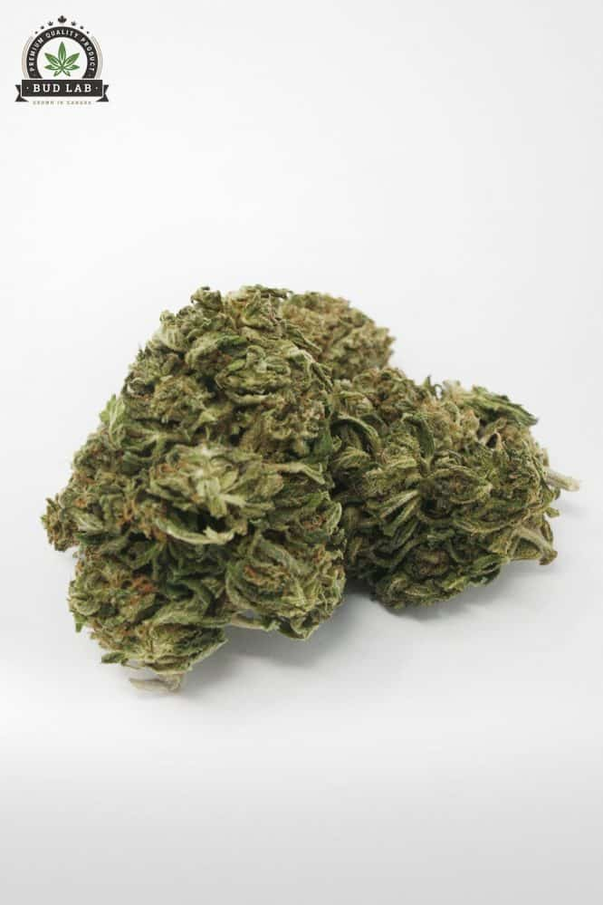 God's Green Crack AA Cannabis Strain