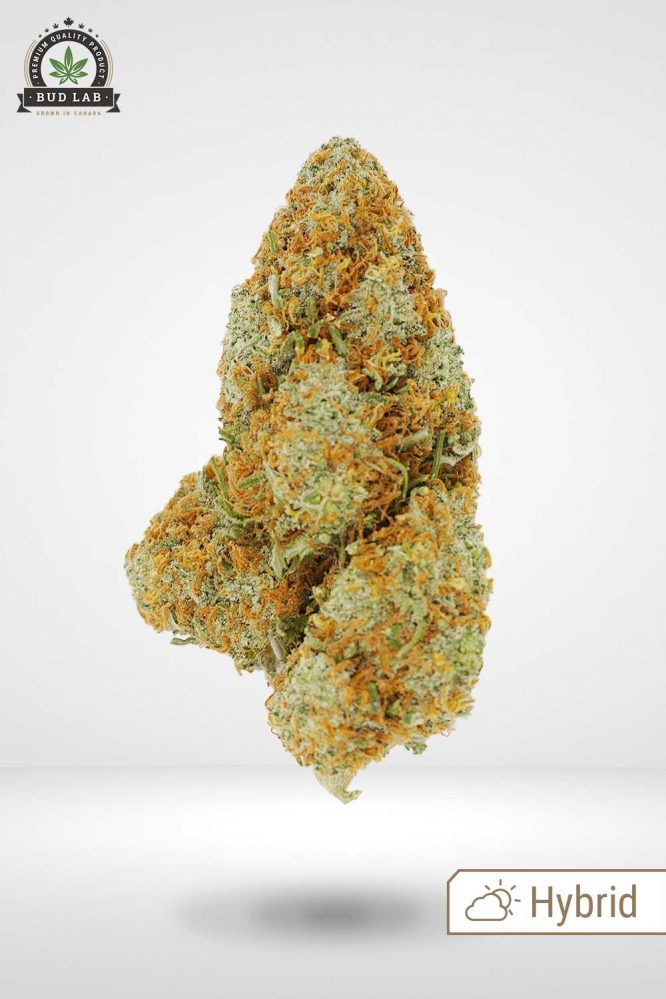 Iced Grape Fruit AAA Hybrid Bud Strain