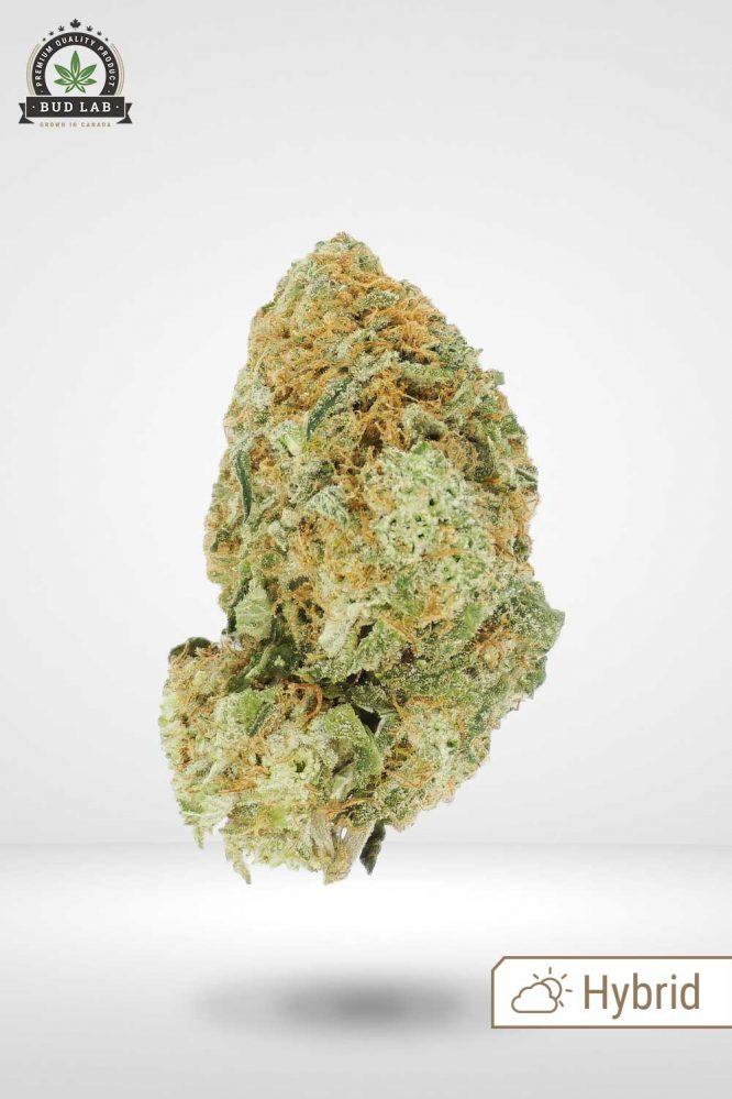 Pineapple Chunk AA, Hybrid Bud Strain