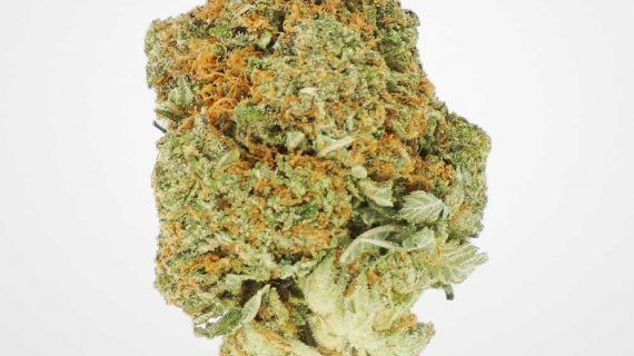 Bud Lab Death Bubba Shake and Trim Grab Bag, Product