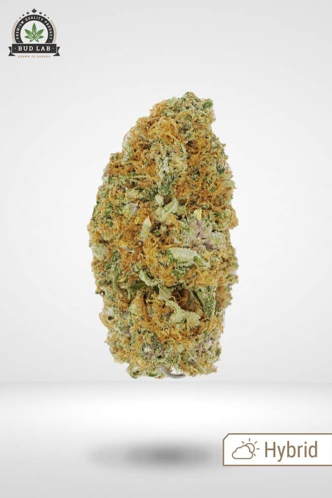 Bud Lab Sour Blueberry AAA Hybrid