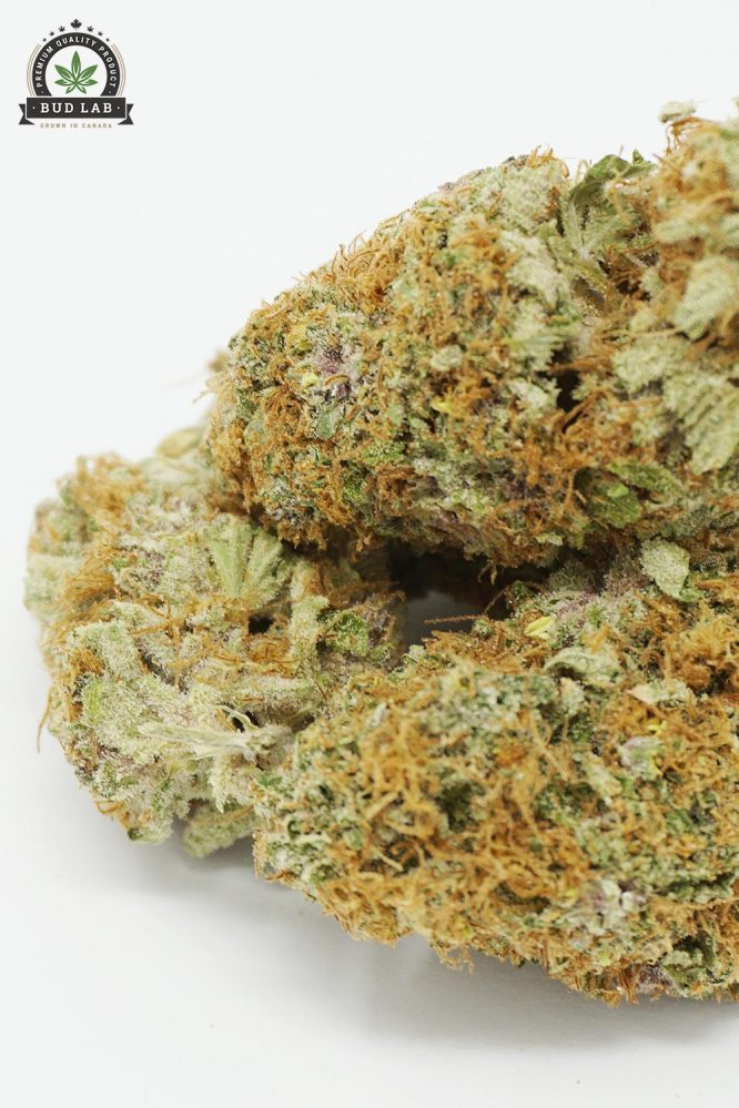 Bud Lab Sour Blueberry AAA Hybrid 2