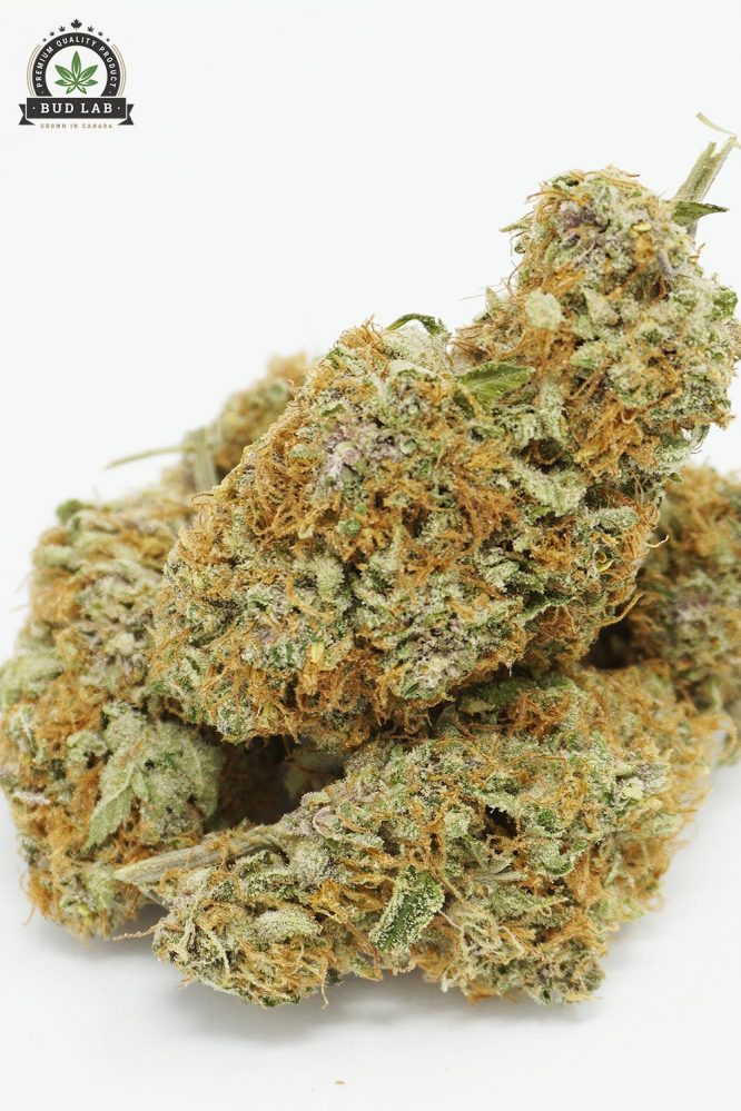 Bud Lab Sour Blueberry AAA Hybrid 3