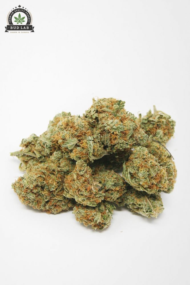 Bud Lab Blueberry Cheesecake AAA Indica 2