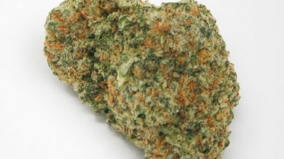 Bud Lab Golden Lemon AAA Sativa