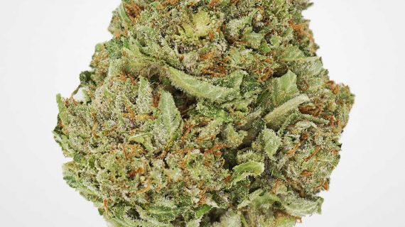 Bud Lab Four Star General AAA Hybrid
