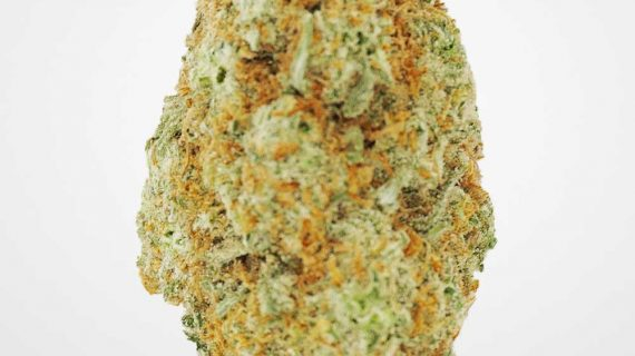 Bud Lab Platinum Girl Scout Cookies AAA Hybrid