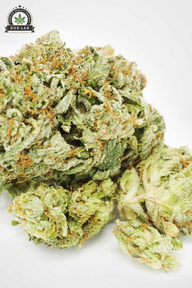 Bud Lab AAA Rated Indica MK Ultra Flower 3