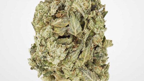 Bud Lab Quad Death Star Indica