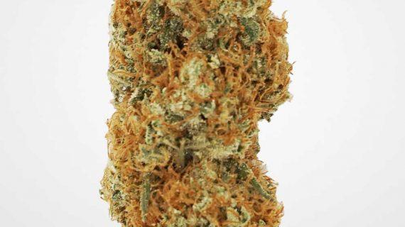 Bud Lab Quad King Congo Sativa Weed