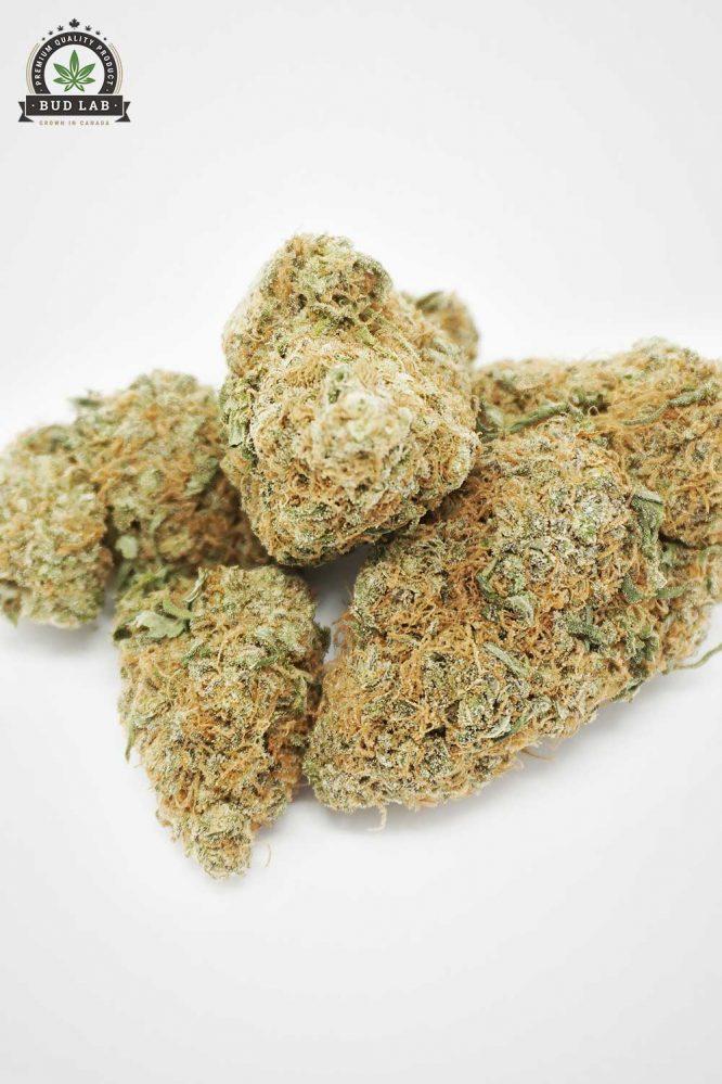 Bud Lab AAA Lamb's Breath Sativa Flower