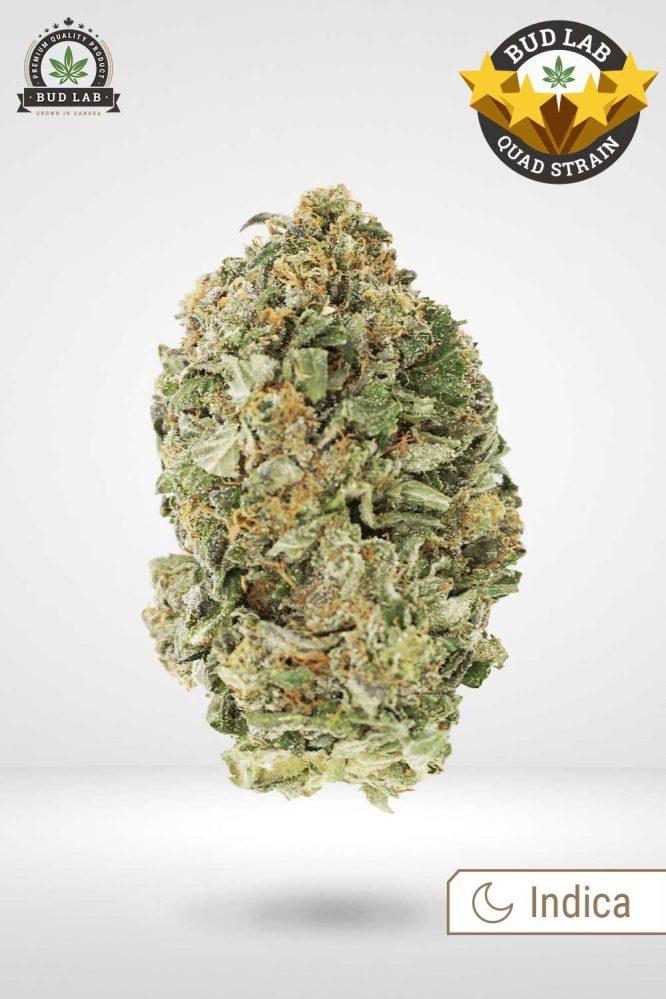 Bud Lab Quad Lindsay OG Indica Weed