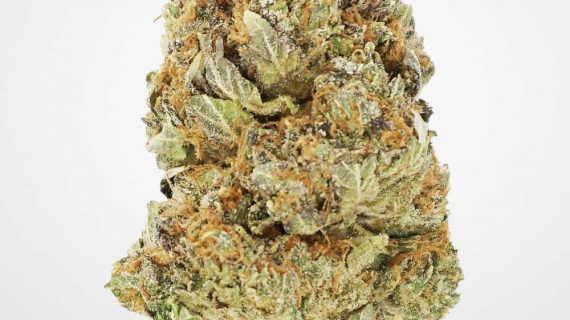 Bud Lab Quad Tom Ford Indica